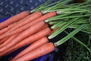 EWSAS carrots sm